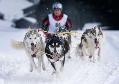 Schlittenhunderennen Inzell 2015